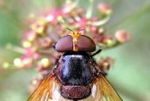: BEES : / for the free spirit ...  bees that bumble & buzz.  | SAVE THE BEES