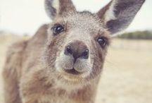 ANIMAL CUTENESS / animal cuteness because it makes me smile