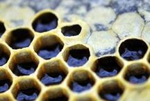 : HONEYCOMBS : / for the free spirit ... honeycomb patterns. nature & design. | Love the hexagon.