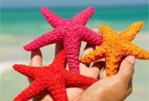 Themes - Beach / Beach party ideas!