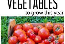 : GARDENING VEGETABLES : / for the vegetable gardener
