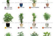 : GARDENING INDOOR PLANTS : / helpful advice for indoor gardening