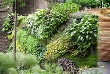 Home ideas: garden / Happy pinning! / by Denise Rogers