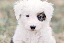 Cute Animals / Pinterest: @kardelenezgi