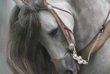 Equine Art / by Loomix Show Livestock and Equine Supplements - ADM Alliance Nutrition, Inc.