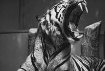 Tiger / Pinterest: @kardelenezgi