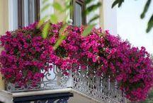 Varandas e Terraços em Flor! / Um álbum com muitas ideias para uma varanda cheia de cor e aromas!  Uma explosão de primavera!  Siga-nos aqui e em www.d-mais.pt