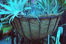 Plants We Carry