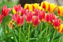 Meglevő virágok / Ezekkel rendelkezünk