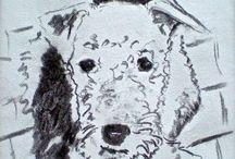 Airedale art / by Sas V