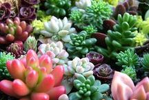 Succulents, Cactus, & Indoor Greenery / Succulent inspiration, Cactus, and other greenery fun