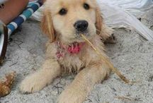 DOGS & PUPPIES / Cute _ Little _ Sweet