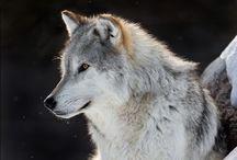 Photos: Wild Creatures