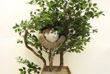 Cat around the house ideas / Things for cats around the house, great ideas to keep your cat busy