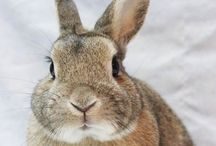 Bunnies / The fact that bunnis exists is proof that everything is going to be okay.