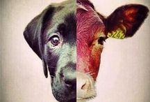 Awareness Animals