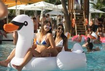 Swanning around... / Everyone loved our inflatable swans at this years Friday Pool Party take a look at some of our favourite photos here!