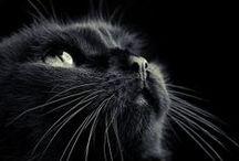 Photo Ideas - Pets / by Designcat Colour