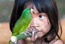 Natureza e Paisagens Brasileiras / A beleza ideal para equilibrar o corpo e a mente  - Brasil