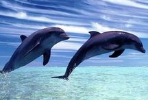 Dolphins make me smile