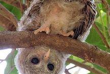 owl's sake