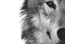 Animals / 気に入った動物たちですψ(`∇´)ψ