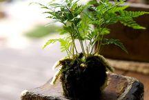 t e r r a r i u m / and other nice things with plants