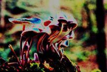 Psychedelic Art / Beautiful art.