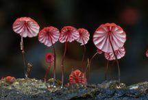 MUSHROOM Beauty / www.bestspores.com