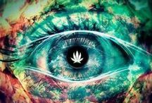 Weed / All things mary jane.  #bestspores www.bestspores.com