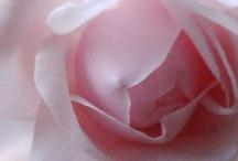 Flowers / everything beautiful / by Nadia Dimitrova Kachelmeier