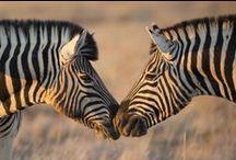 Animals Lovers / Animals we love all around the world