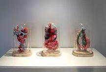 Organe musculaire servant à la circulation du sang