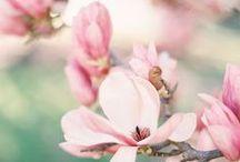 Spring *.*