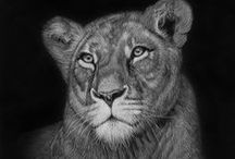 White Pencil on Black Paper / White Pencil on Black Paper / by Realistic Pencil Drawing