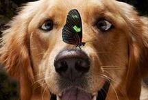 """GOLDEN MANIA / """"Si tuviera que elegir en quien confiar... lo haría por mi perro... hasta ahora es el único que no ha contado a nadie todos mis secretos..."""". - Arnold Cano"""