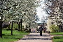 Grove City College Campus / A glimpse of the beautiful campus at Grove City College. The campus was designed by the Olmsted brothers, who designed Central Park in New York City.