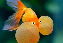 Animals ~ UNDERWATER / #Animals, #Underwater, #Fish. Underwater is another world to me! Amazing!