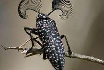Flying & Creeping Bugs