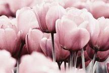 love tulips!!