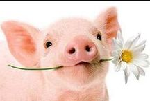 This little piggy..... / I simply love pigs...