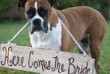 """Pets in Weddings / Who says you can't have your next favorite """"person"""" in your wedding? Your pet, whether it be a cat or dog, makes a great addition to your big day!"""
