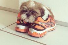 AWWW / #Aww, #Cute, #Adorable, #Precious ~ When I say Awww :) - :(