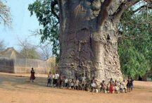 AMAZING TREES / #Trees .Awesome Trees