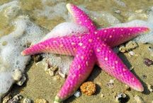 SEA STARS & SHELLS / #SeaShells, #SeaStars. Amazing Shells, Stars Please Be Courteous & Don't OverPin My Boards!  / by Oz Wilson