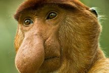 Animals ~ PRIMATES / #Animals, #Monkeys, #Apes, #Gorillas. Yes, we do share some DNA with them :)