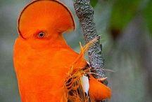 Animals ~ BIRDS / #Animals, #Birds. Beautiful Birds!