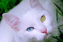 Animals ~ CATS / #Cats, #Animals. Not much cat person, but love them!