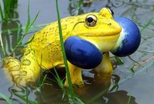 Animals ~ FROGS / #Animals, #Frogs.They can get noisy :)