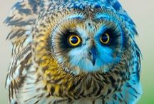 Animals ~ OWLS / #Animals, #Owls. Only animal that doesn't hunt for food as far as I know..